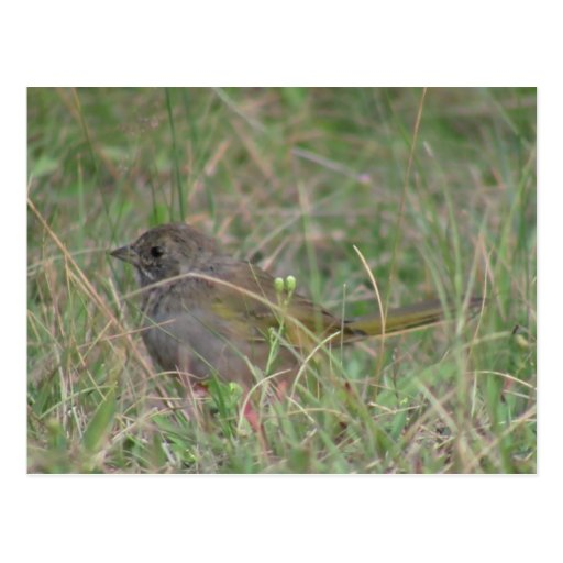 Animales de Aves de los pájaros de la fauna de Tarjeta Postal