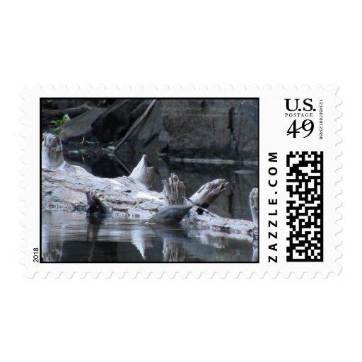 Animales de Aves de los pájaros de la fauna de Timbre Postal