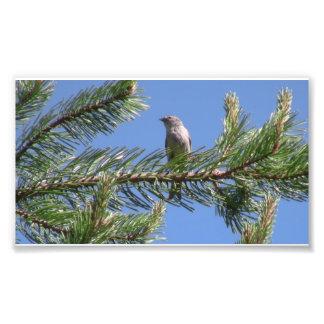 Animales de Aves de los pájaros de la fauna del bo Fotografías