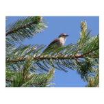 Animales de Aves de los pájaros de la fauna del Postal