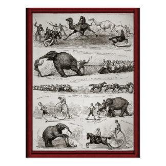Animales de circo del vintage y cominos del postal