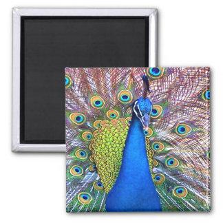 Animales de la fauna de las plumas de pájaro del imán cuadrado