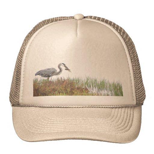 Animales de la fauna de los pájaros de la garza de gorras