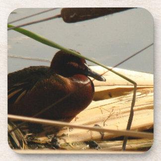 Animales de la fauna de los pájaros de los posavasos de bebidas