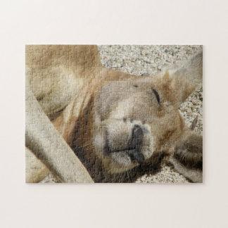 Animales de la fauna el dormir del canguro del rompecabezas con fotos