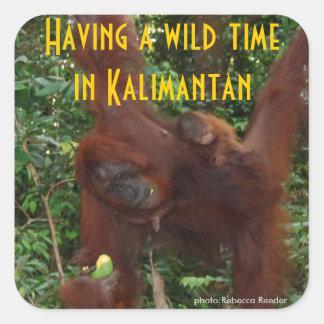 Animales de la selva tropical de Kalimantan Borneo Pegatina Cuadrada