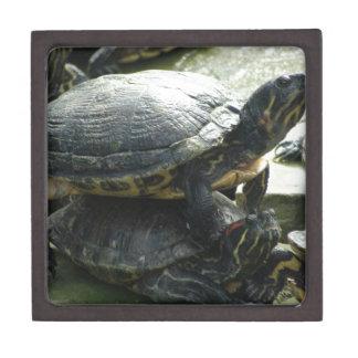 Animales de la tortuga cajas de joyas de calidad