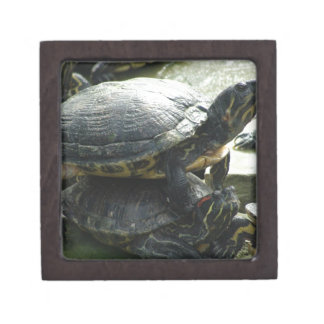 Animales de la tortuga caja de regalo de calidad