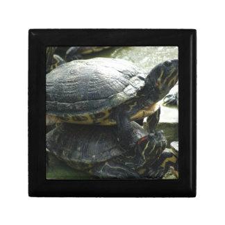 Animales de la tortuga cajas de recuerdo