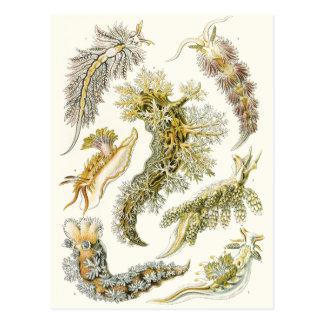 Animales de la vida marina del vintage, caracoles  tarjeta postal