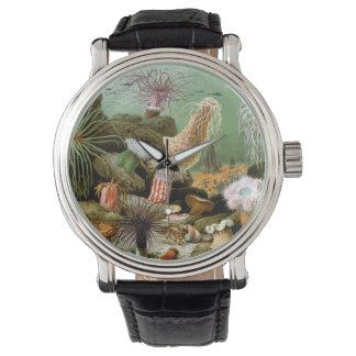 Animales de las anémonas de mar del vintage por reloj