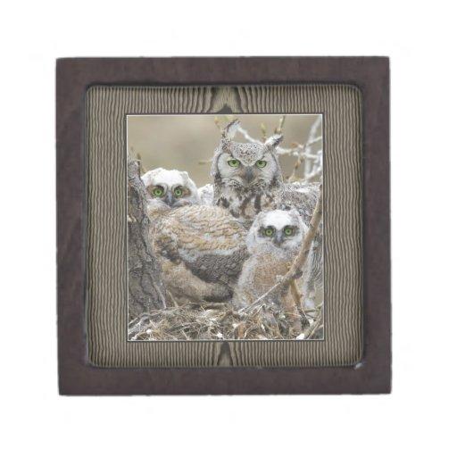Animales de los pájaros de la naturaleza de la fam cajas de joyas de calidad