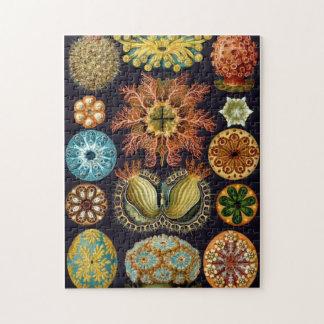 Animales de mar del vintage puzzle con fotos