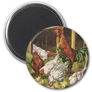 Animales del campo del vintage, gallo, gallinas, imán redondo 5 cm
