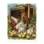 Animales del campo del vintage, gallo, gallinas, p tarjetas postales