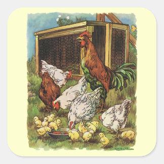 Animales del campo del vintage, gallo, gallinas, pegatina cuadrada
