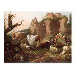 Animales del campo en un paisaje, 1685 tarjetas postales