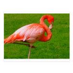 Animales del parque zoológico tarjetas postales