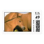 Animales domesticados 81 sellos