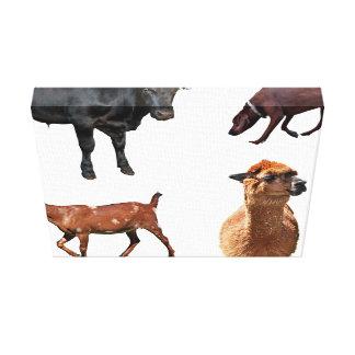 Animales domésticos impresión de lienzo