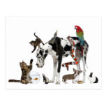 Animales dulces junto postales