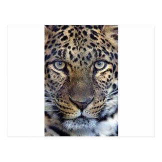 Animales en el salvaje postales