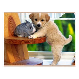 Animales lindos tarjeta postal
