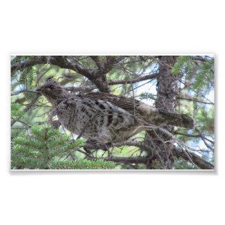 Animales llameantes de Aves de los pájaros de la f Fotografias