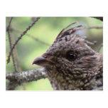 Animales llameantes de Aves de los pájaros de la Postal