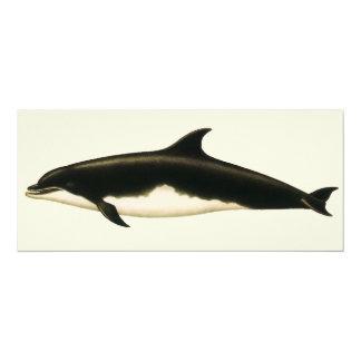 Animales marinos del vintage, mamíferos, delfínes invitación