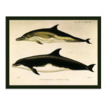 Animales marinos del vintage, mamíferos, delfínes postal