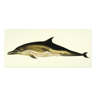 Animales marinos del vintage, mamíferos, delfínes diseños de tarjetas publicitarias