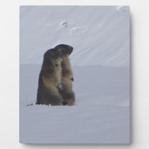 animales marmotas salvaje placas de madera