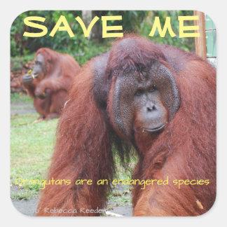 Animales masculinos de Borneo del orangután Pegatina Cuadrada