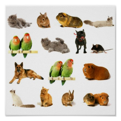 animales impresiones