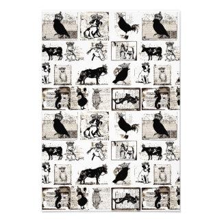 Animales reales blancos y negros del vintage cojinete