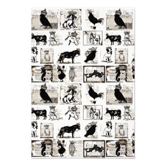 Animales reales blancos y negros del vintage impresion fotografica