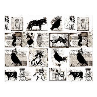 Animales reales blancos y negros del vintage tarjetas postales