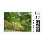 Animales salvajes 22 sello
