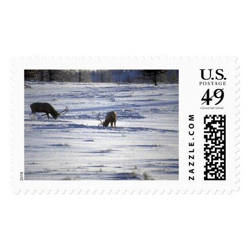 Animales salvajes 92 sellos