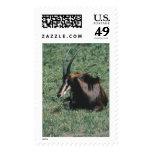 Animales salvajes 98 sello