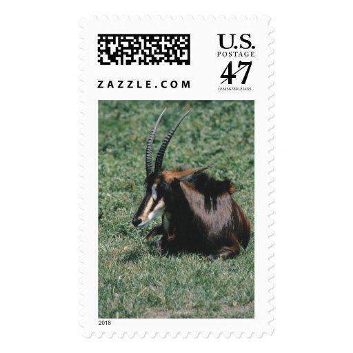 Animales salvajes 98 sellos postales