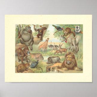 Animales salvajes de África Poster