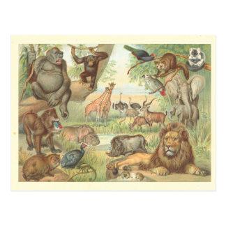 Animales salvajes de África Tarjeta Postal
