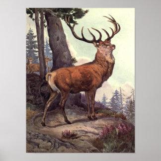 Animales salvajes del vintage, ciervo común de póster