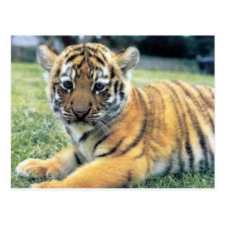 Animales salvajes tarjeta postal