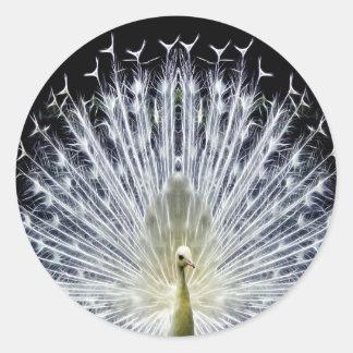 Animalia blanco del Pavo del pavo real Pegatina Redonda