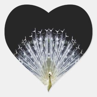 Animalia blanco del Pavo del pavo real Pegatina En Forma De Corazón