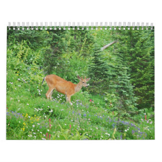 Animals 2013 calendars