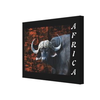 Animals africa buffalo art stretched canvas prints